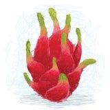 Dragon fruit. Closeup illustration of a fresh exotic dragon fruit Stock Photos