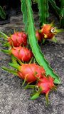 Dragon Fruit Fotografia Stock