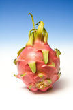 Dragon fruit Royalty Free Stock Photos