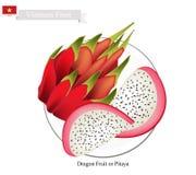 Dragon Fruit, A Famous Fruit in Vietnam Stock Photos