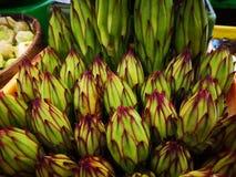 Dragon Fruit Flower royaltyfria bilder