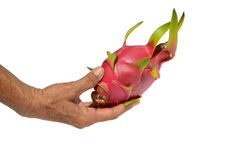 Dragon fruit on hand. And isolate stock images