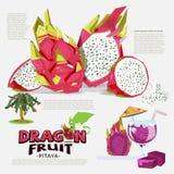 Dragon fruit information graphic. tree. juice. logotype. Pitaya. Vector illustration Royalty Free Stock Photo