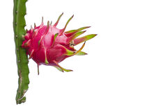 Dragon Fruit isolated against white background Royalty Free Stock Photography
