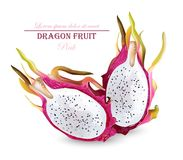 Dragon fruit isolated Vector realistic. Summer tropic pitaya healthy fruits. Dragon fruit isolated Vector realistic. Summer tropic pitaya healthy fruit Royalty Free Stock Photos