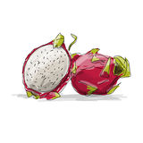 Dragon Fruit, pitahaya sketch for your design Stock Images
