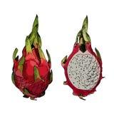 Dragon fruit or pitahaya. Royalty Free Stock Photography