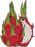Dragon Fruit or Pitaya. Isolated on a White Background Stock Photos