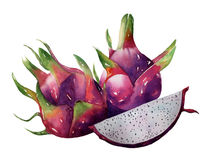 Dragon fruit, pitaya watercolor bright color hand drawn vector o Stock Photos