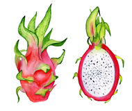 Dragon fruit slice watercolor hand drawn illustration. Tropical exotic fruit isolated on the white background Royalty Free Stock Image