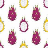 Dragon Fruit Teste padrão sem emenda do vetor para o projeto ilustração royalty free