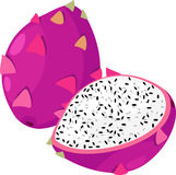 Dragon Fruit vector. Dragon Fruit isolated illustration on white background vector Stock Image