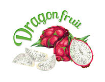 Dragon fruit. Vector illustration made in a realistic style. Isolated on white background Stock Images