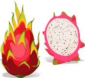 Dragon fruit - vector illustration Royalty Free Stock Photos