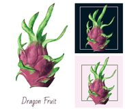 Dragon fruit on white background. Watercolor painting. Stock Photo