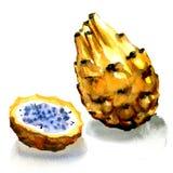 Dragon Fruit, Yellow pitahaya isolated, watercolor illustration on white Stock Photo