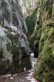 The Dragon Gorge near Eisenach Royalty Free Stock Photos