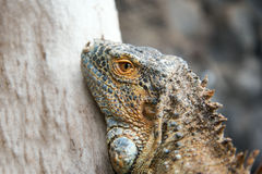 Dragon head. Stock Images