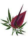 Dragon Lily Foto de Stock