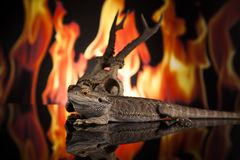 Dragon lizard and deer skull Royalty Free Stock Photography