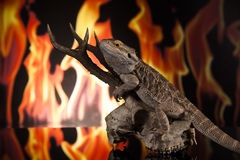 Dragon lizard on a deer skull Royalty Free Stock Images