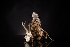 Dragon lizard and deer skull Royalty Free Stock Images