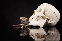 Dragon lizard and human skull Stock Photos