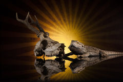 Dragon lizard next deer skull Royalty Free Stock Photography