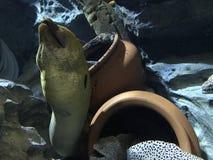 Dragon Moray- und Schneeflockenmoray Lizenzfreie Stockbilder
