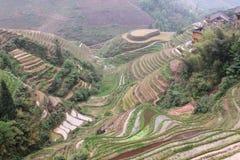 Dragon Ridge Terrace delle risaie Fotografie Stock Libere da Diritti