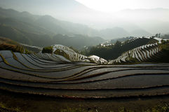 Dragon's Backbone Rice Terraces Royalty Free Stock Images