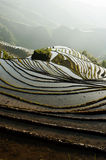 Dragon's Backbone Rice Terraces Royalty Free Stock Photography