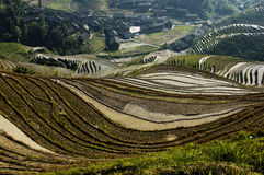 Dragon's Backbone Rice Terraces Stock Photography