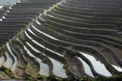Dragon's Backbone Rice Terraces Royalty Free Stock Photos