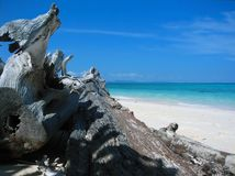Dragon's sunbathe in Paradise. Dead wood, almost resembling a dragon looking at the sky and catching some sun rays. This is a beach view from Bamboo Island (near Royalty Free Stock Image