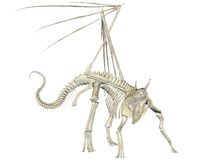 Dragon Skeleton Stock Images