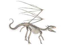 Dragon Skeleton Stock Afbeelding