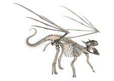 Dragon Skeleton Royalty Free Stock Photo