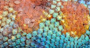 Dragon Skin Pattern Texture Stock Image