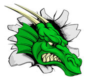 Dragon sports mascot breakthrough. Concept of a dragon sports mascot or character braking out of the background or wall Royalty Free Stock Image