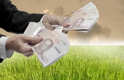 Invest in rice farm concept. Businessman carry Thai money with rice field background stock photography