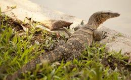 Dragon thaï Images libres de droits