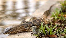 Dragon thaï Photo stock