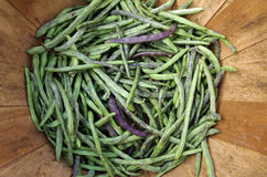 Dragon Tongue Beans immagini stock