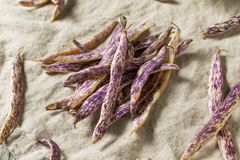 Dragon Tongue Beans roxo orgânico foto de stock