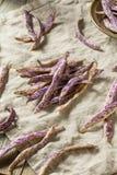 Dragon Tongue Beans roxo orgânico fotografia de stock
