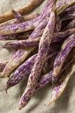 Dragon Tongue Beans roxo orgânico imagem de stock royalty free