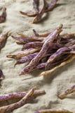 Dragon Tongue Beans roxo orgânico imagens de stock