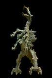 Dragon of Wawel. Stock Photography