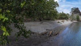 Dragones de Komodo en una playa Fotografía de archivo